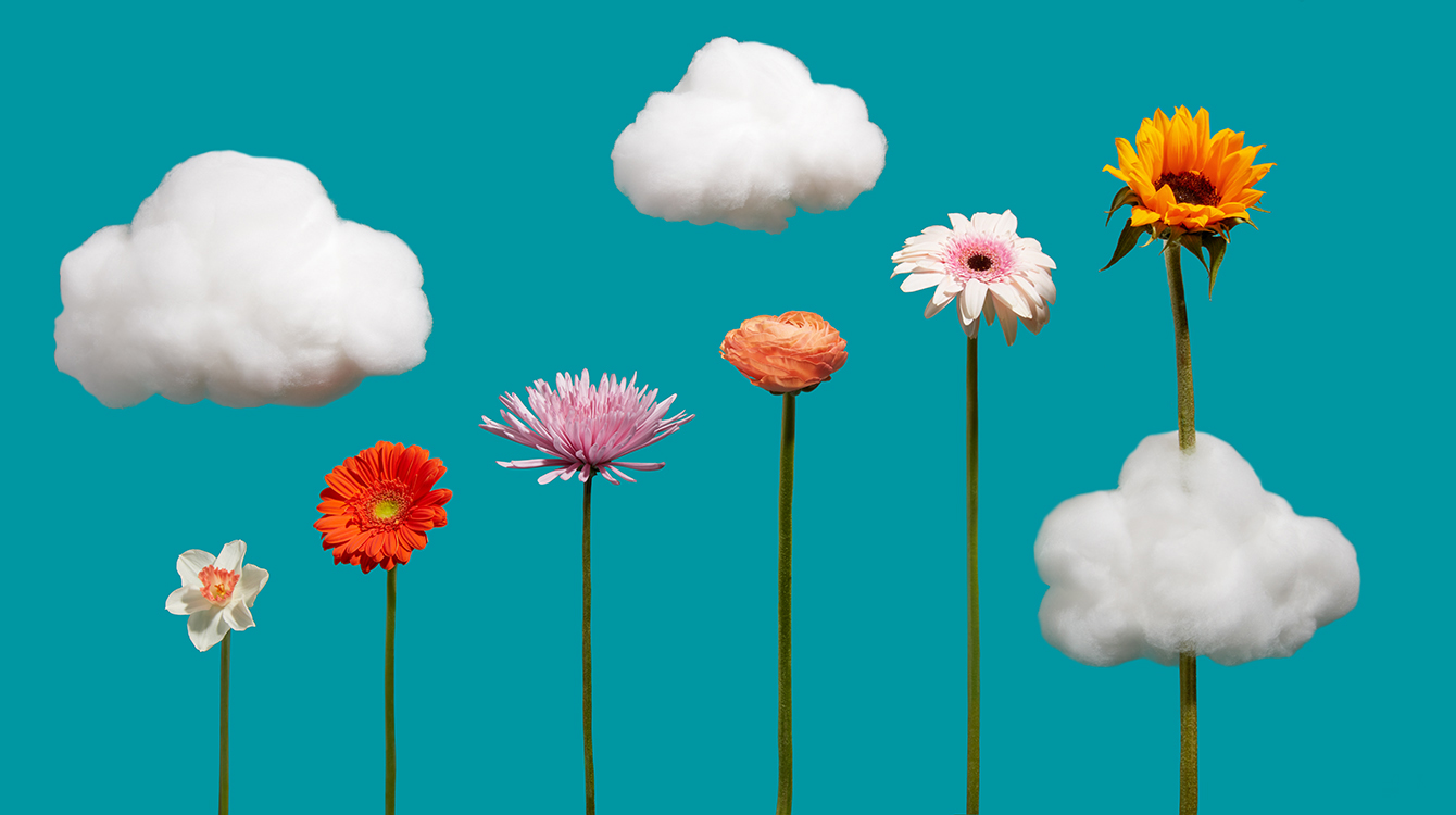 Flowers getting taller with clouds representing productivity